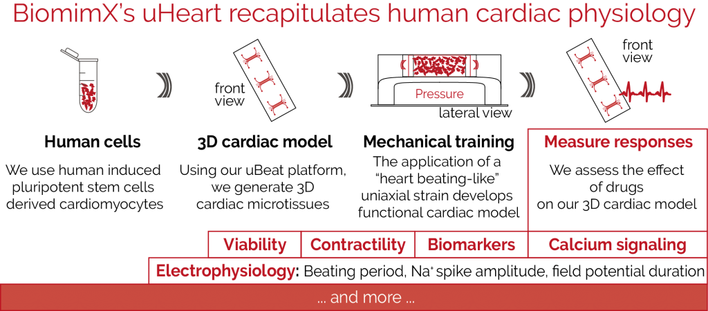 biomimx-services-for-cardiac-safety